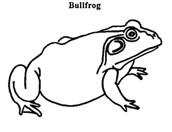 Bullfrog, : Pregnant Bullfrog Coloring Pages