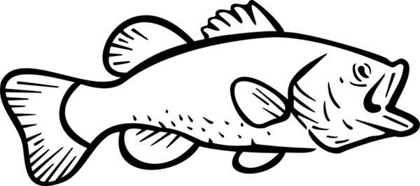 Bass Fish, : River Bass Fish Coloring Pages