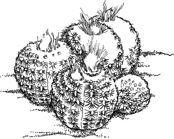 Cactus, : Round Shaped Cactus Coloring Pages