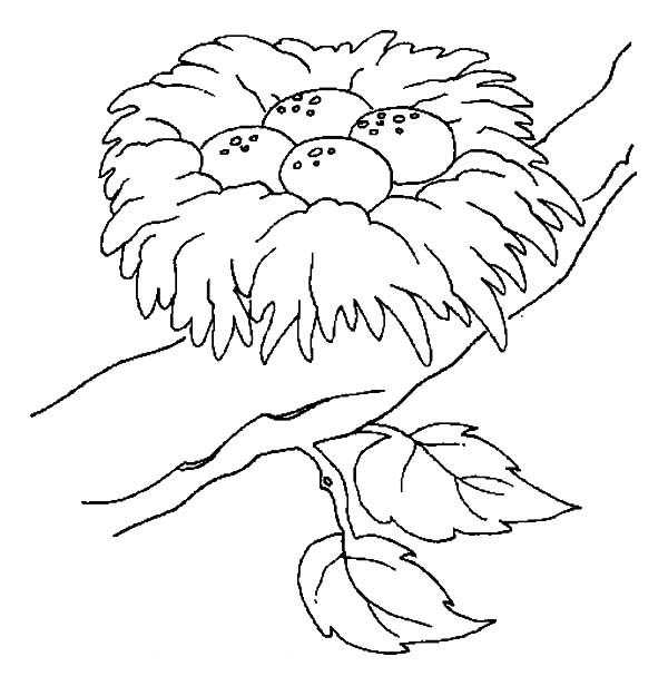 Bird Nest, : Safest Place for Bird Eggs is Bird Nest Coloring Pages