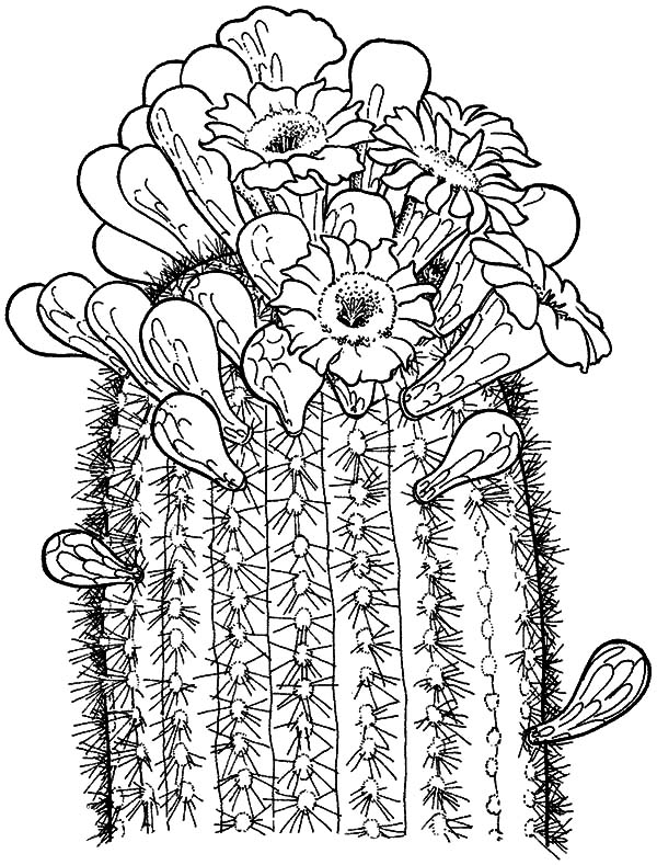 Saguaro cactus outline the image kid for Cactus coloring page
