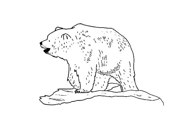 Brown Bear, : Scary Brown Bear Coloring Pages