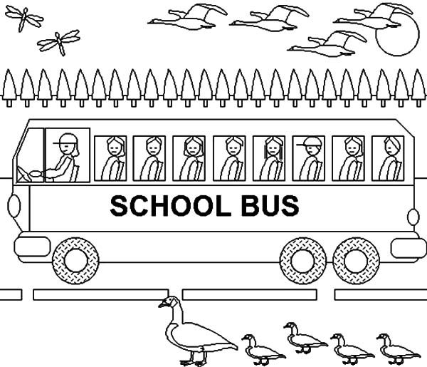 Bus Driver, : School Bus Driver Drive Along with Birds Coloring Pages