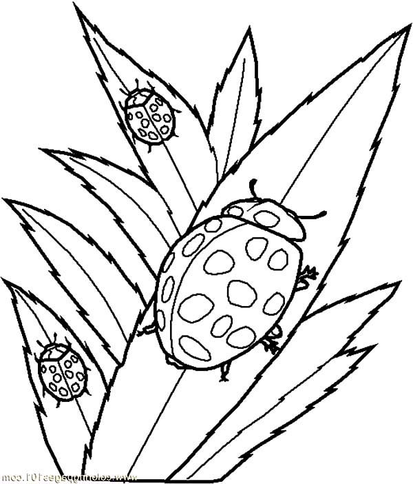 Beetle, : School of Beetle Coloring Pages