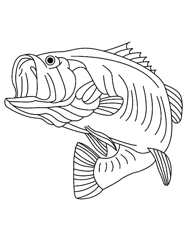 Bass Fish, : Sea Predator Striped Bass Fish Coloring Pages