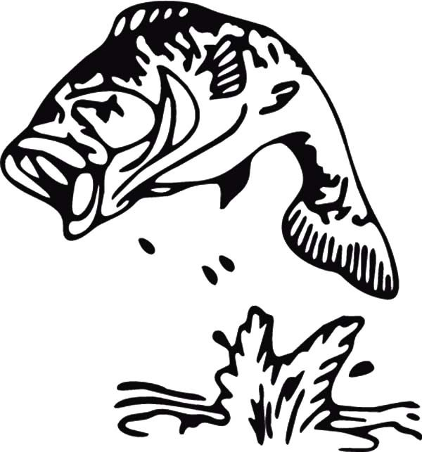 Bass Fish, : Sea Stripped Bass Fish Coloring Pages