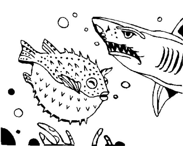 Blowfish, : Shark is Afraid to Blowfish Coloring Pages