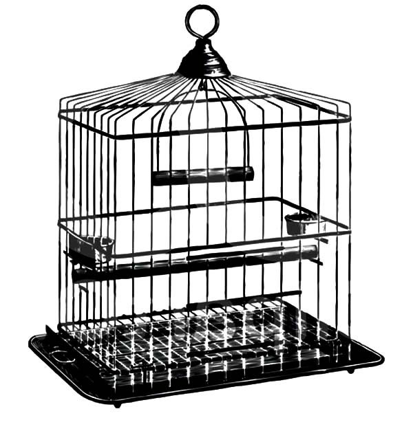 Bird Cage, : Sketch of Bird Cage Coloring Pages