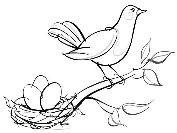 Bird Nest, : Sketch of Bird Nest Coloring Pages
