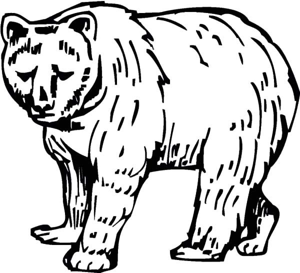 Brown Bear, : Sketch of Brown Bear Coloring Pages