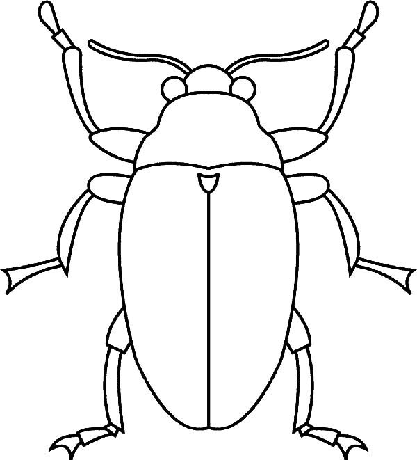 Beetle, : Snout Beetle Coloring Pages