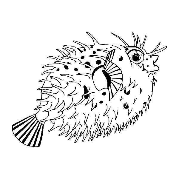 Blowfish, : Spiny Puff Blowfish Coloring Pages
