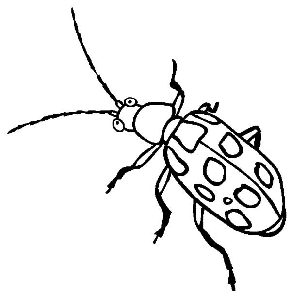 Beetle, : Spotted Cucumber Beetle Coloring Pages