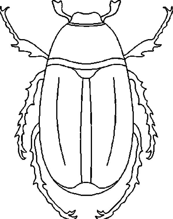 Beetle, : Stag Beetle Species Coloring Pages
