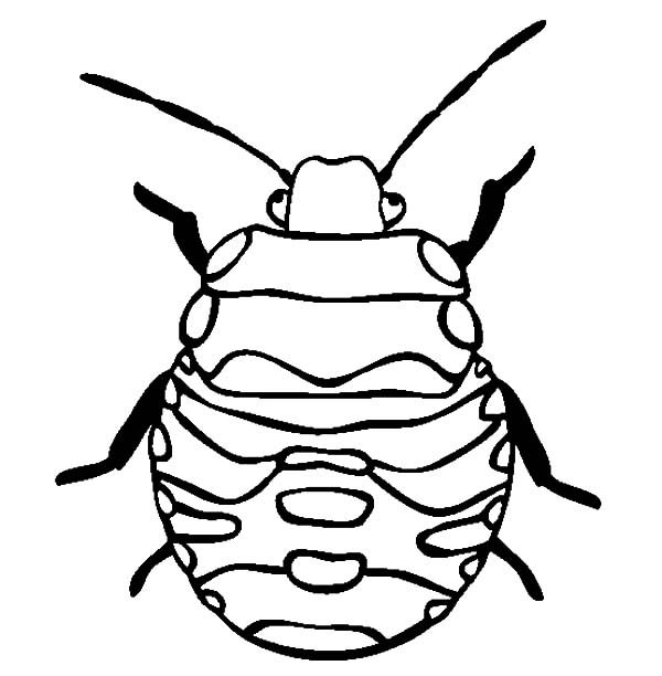 Beetle, : Stink Bug Beetle Coloring Pages