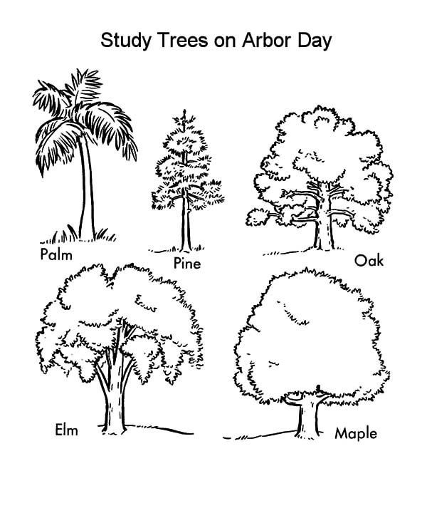 Arbor Day, : Study Trees on Arbor Day Coloring Pages