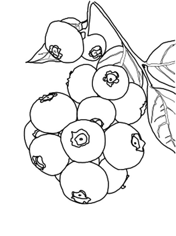 Blueberry Bush, : Sweet Blueberry Bush Coloring Pages