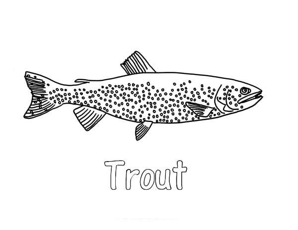 Apache Trout, : Tahoe Apache Trout Coloring Pages