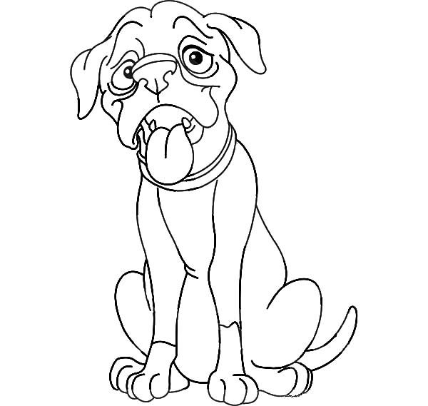 Boxer Dog, : Thin Boxer Dog is Hungry Coloring Pages