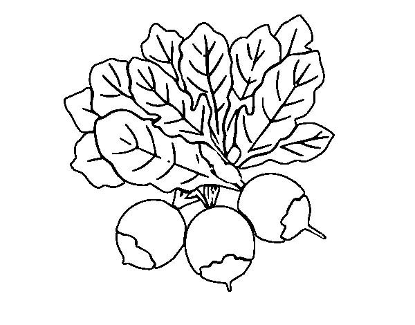 Beets, : Three Beets Coloring Pages