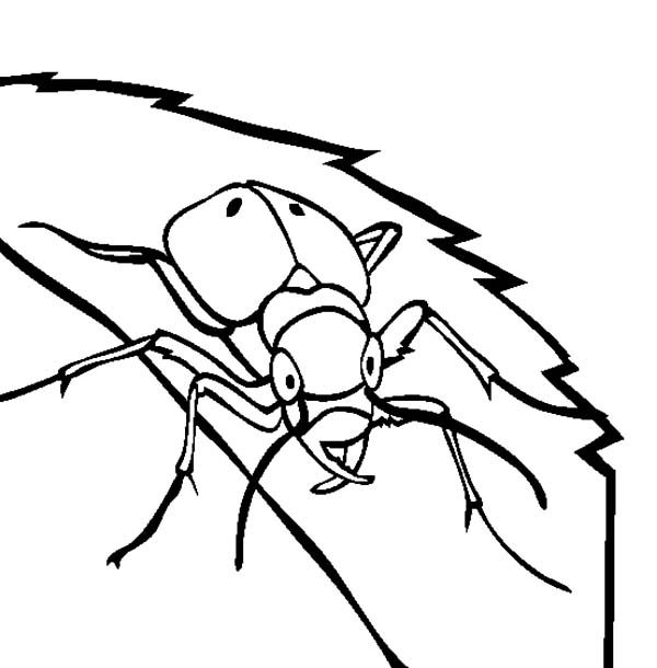 pill bug coloring pages - photo#29