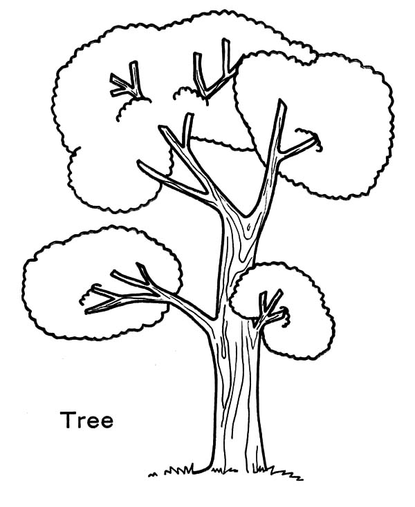 Tree Produce Oxygen For Our Life On Arbor Day Coloring Size Tree Coloring Page