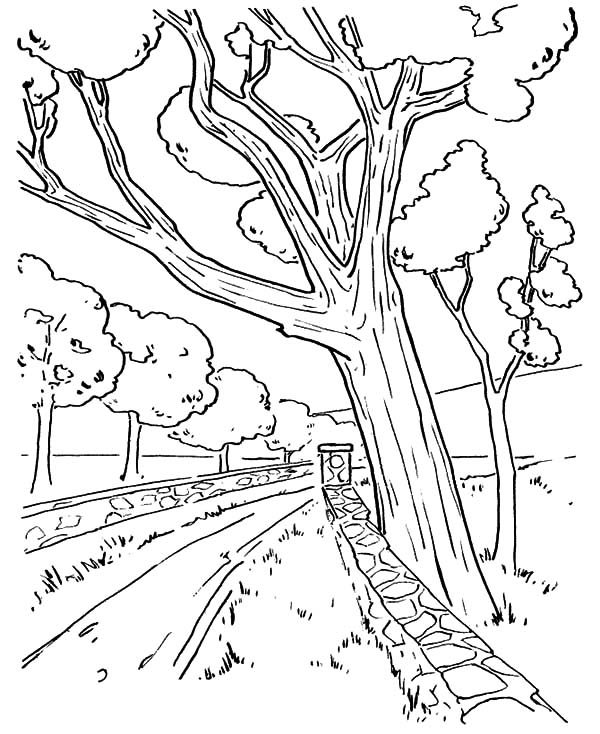 Arbor Day, : Trees Along the Road on Arbor Day Coloring Pages