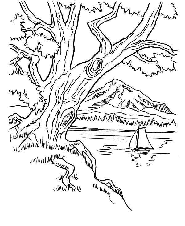 Arbor Day, : Trees on Mountains Area on Arbor Day Coloring Pages