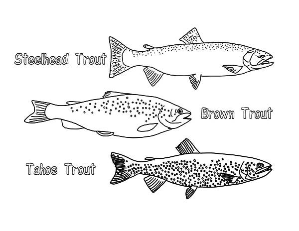 Apache Trout, : Type of Apache Trout Coloring Pages