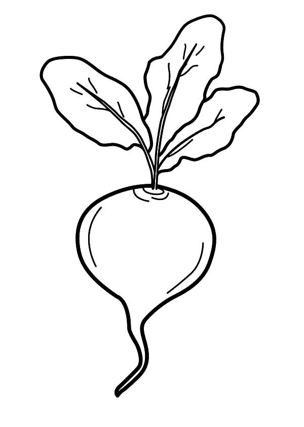 Vegetables Beets Coloring Pages
