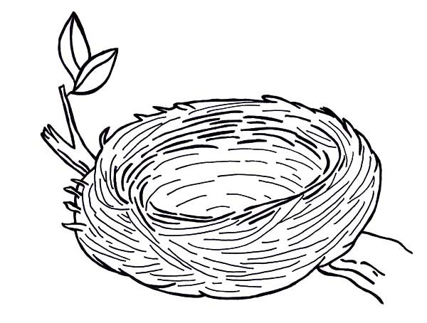 Bird Nest, : Warm and Safe Bird Nest Coloring Pages