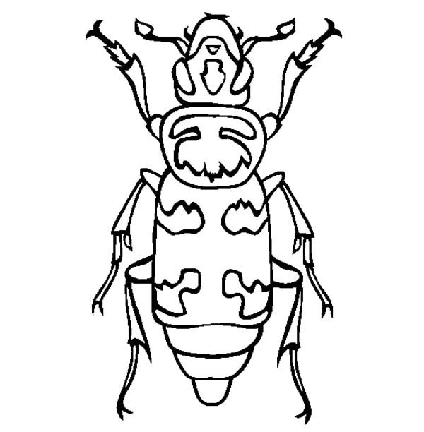 Beetle, : Wasp Mimic Beetle Coloring Pages