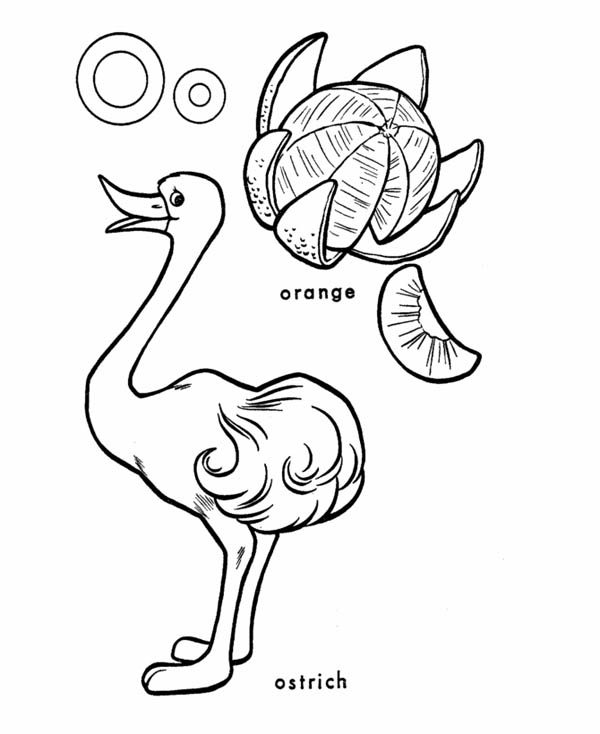 Letter O, : Kids Learning Letter O Coloring Page