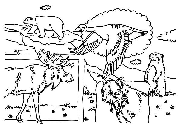 Canada Day, : List of Indigenous Animals on 2015 Canada Day Event Coloring Pages