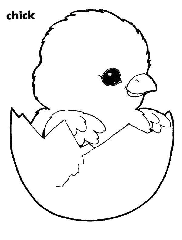 Chick Hatching, : Adorable Chick Hatching Coloring Pages