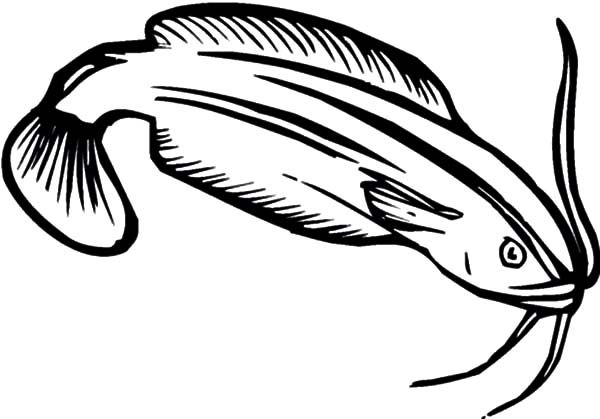Catfish, : Amazing Animal Catfish Coloring Pages