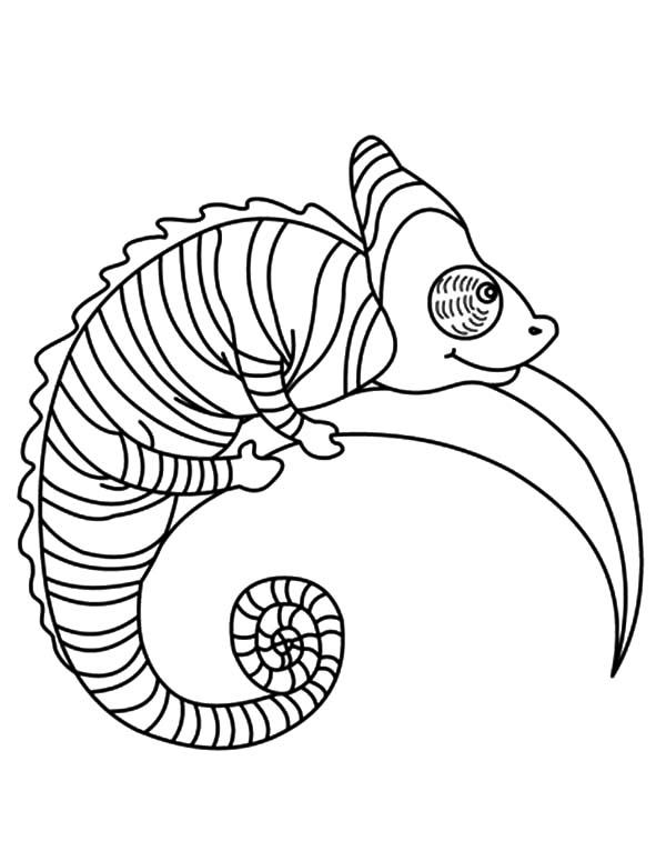 amazing animal chameleon coloring pages - Chameleon Coloring Pages Print