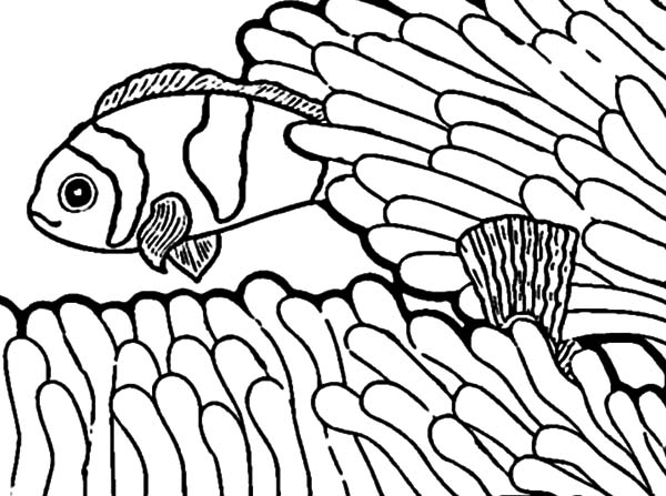 Clown Fish, : Anemon is Clown Fish Playground Coloring Pages