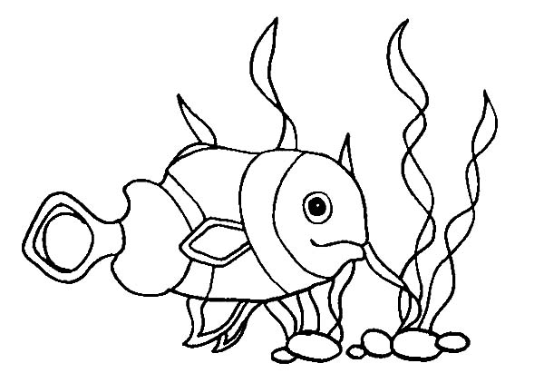 Clown Fish, : Baby Clown Fish Coloring Pages