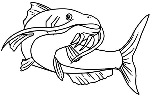 Beautiful Catfish Coloring Pages: Beautiful Catfish Coloring Pages ...