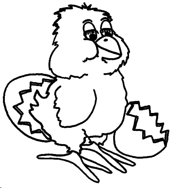 Chick Hatching, : Beautiful Chick Hatching Coloring Pages