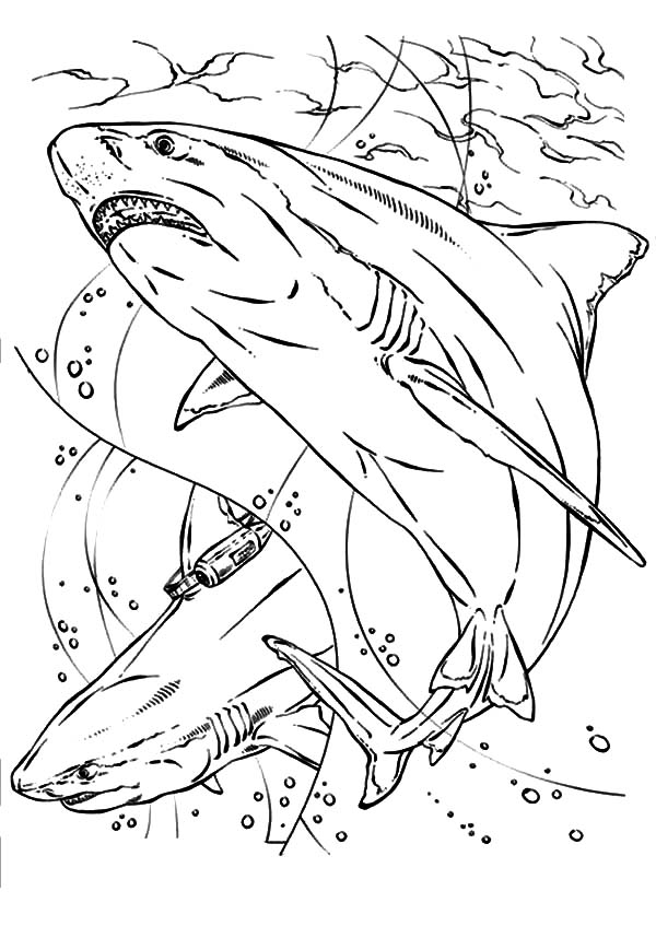Jaws, : Bull Shark Jaws Coloring Pages