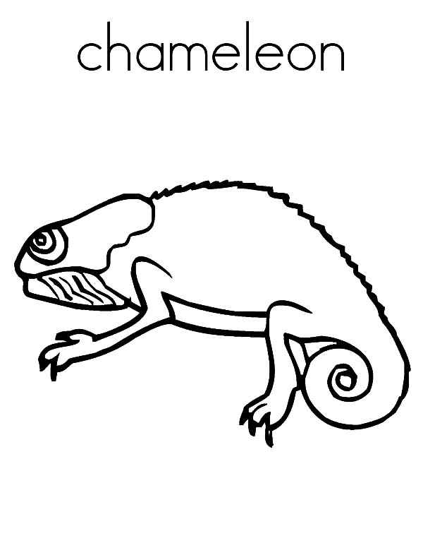 c is for chameleon coloring pages - Chameleon Coloring Pages Print