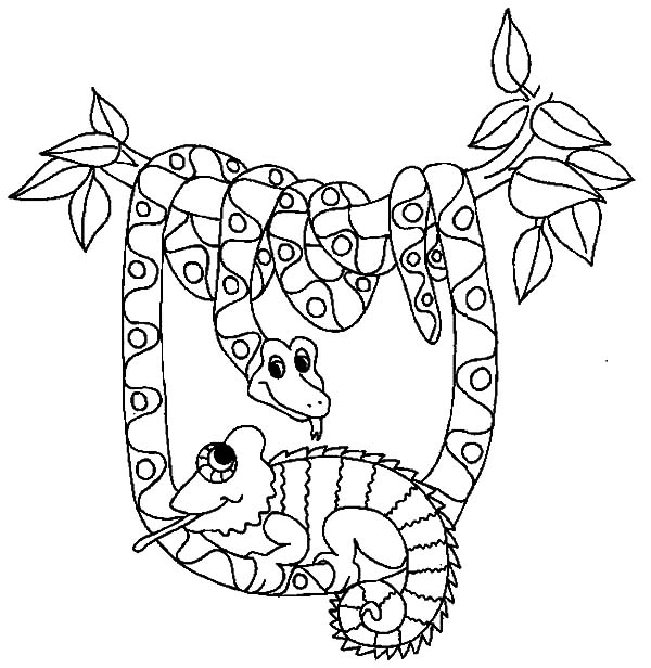 Chameleon, : Cameleon Be Friend with Snake Coloring Pages