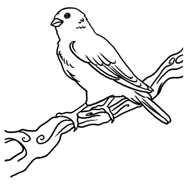 Canary-Bird-Coloring-Pages-for-Kids.jpg