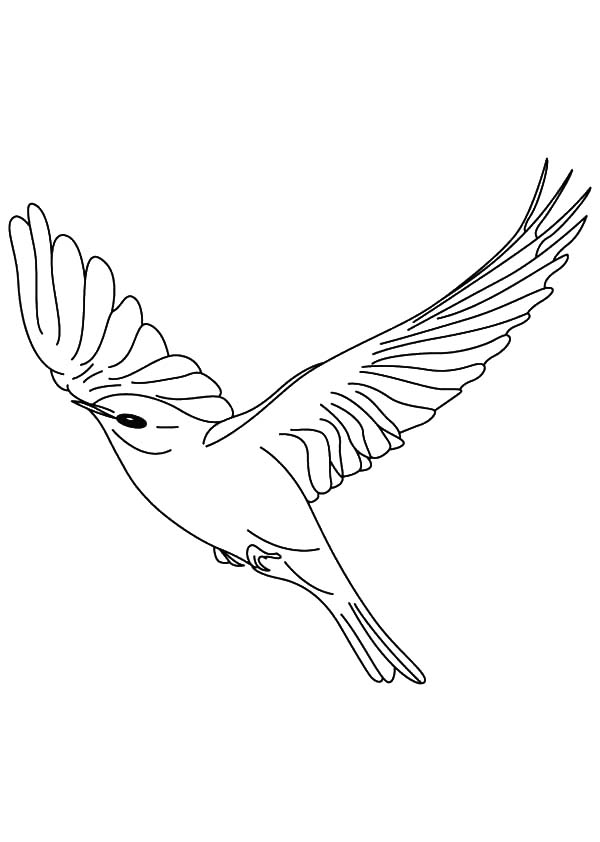 Canary Bird, : Canary Bird Floating in the Sky Coloring Pages