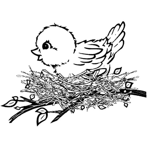 Canary Bird, : Canary Bird Nest Coloring Pages
