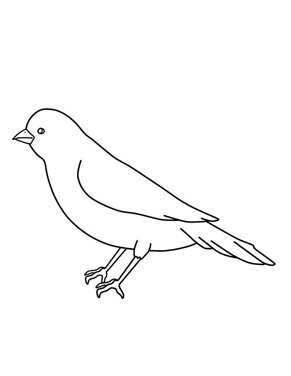 Canary Bird Outline Coloring Pages