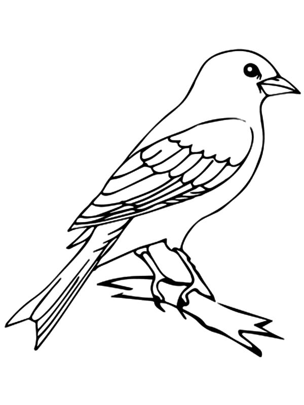 Happy Canary Bird Coloring Pages