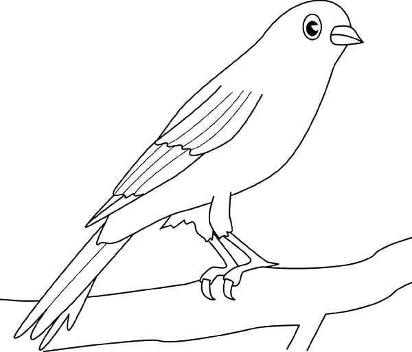 Canary Bird, : Canary Bird Picture Coloring Pages